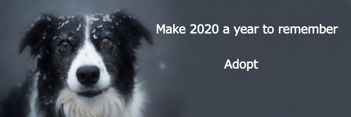 New Year Dog Adopt