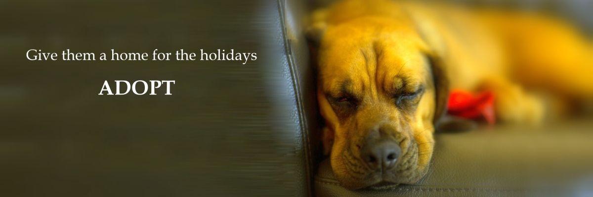 Holiday Dog Adopt